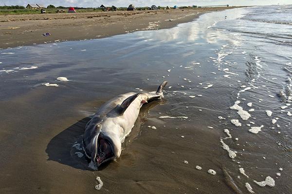 Altos niveles de tóxicos en mamíferos marinos europeos