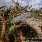 Profepa asegura que no hubo devastación en Tajamar