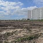 Fonatur avaló ecocidio en Tajamar, porque documentación está conforme a la ley