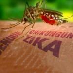 Se registran 488 casos de dengue en Tamaulipas