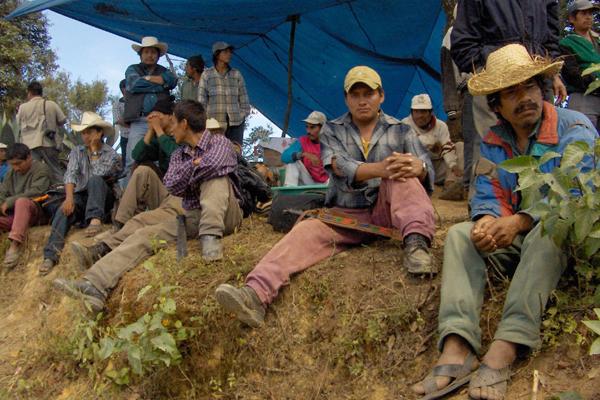 Cultivos mexicanos en riesgo por caída del peso
