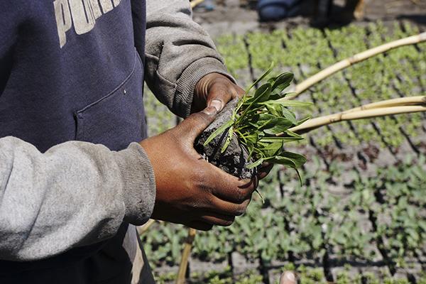FAO reconoce a las chinampas de Xochimilco como Patrimonio Agrícola Mundial