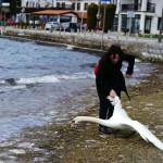 Asesina mujer a cisne al intentar tomarse una selfie