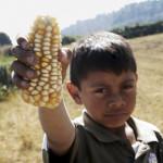 Campesinos y científicos ganan batalla legal contra Monsanto