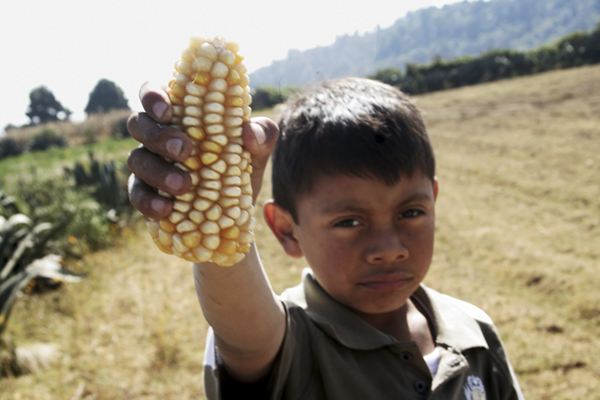 Monsanto, apoyado por Gobierno federal gracias a Reforma de Peña Nieto