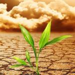 5 alimentos amenazados por el cambio climático