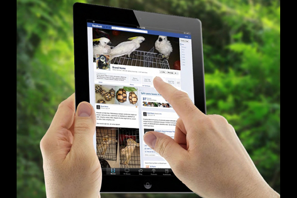Usan redes sociales para traficar animales exóticos