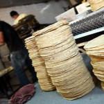 Tortilla, buena para los dientes: UNAM