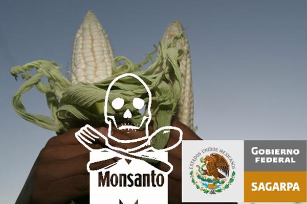 En México 90.4% de las tortillas contiene maíz transgénico de EU: Estudio