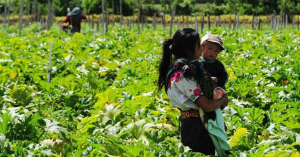 Mujeres de América Latina carecen de tierras para producir alimentos