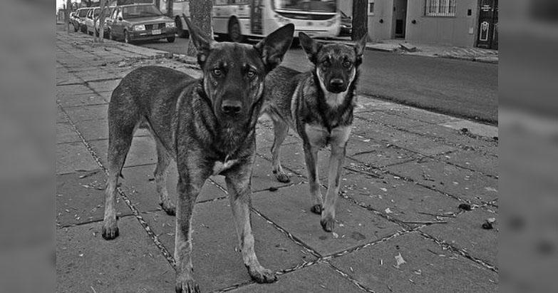 ONGs piden derechos para animales en nueva Constitución de Cd. de México