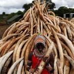 Queman los colmillos de 6,700 elefantes en Kenia