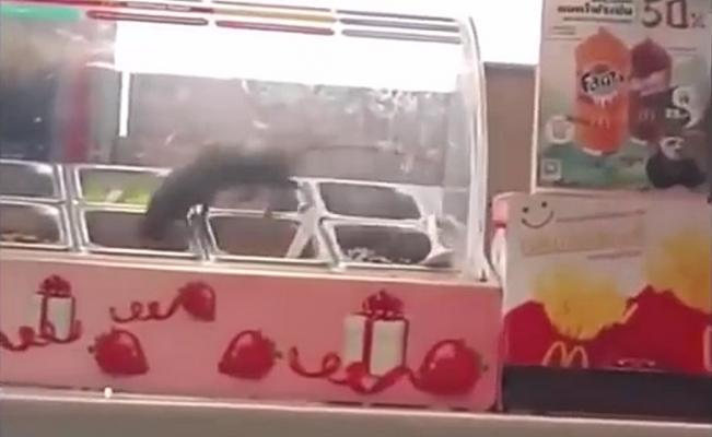 Rata saborea alimentos en McDonald's +VIDEO