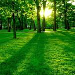 La tierra es más verde que hace 30 años, por aumento del CO2