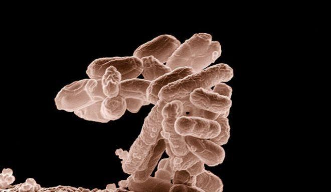 Existe una bacteria resistente a todos los antibióticos