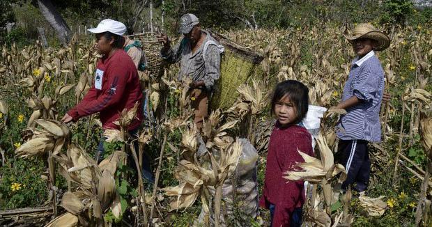Más de dos millones de niños trabajan en México