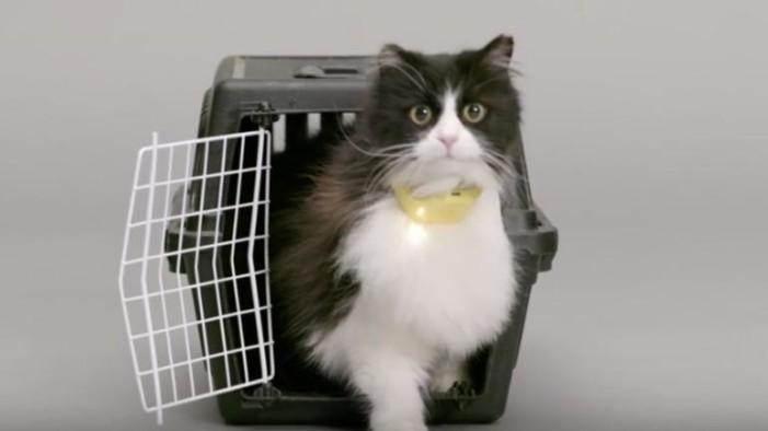 Crean collar que permite a los gatos hablar (video)