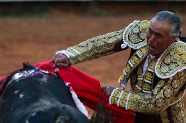 Cuando un toro mata a un torero es sacrificado junto a toda su familia