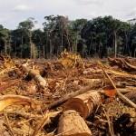 Noruega ya no consumirá productos que contribuyan a la deforestación