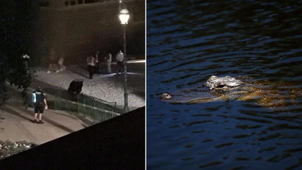 Sacrifican a cuatro caimanes en búsqueda de niño en Disney