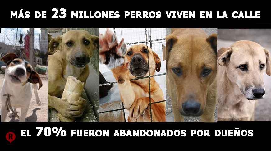 [Imagen: perros_callejeros.jpg]