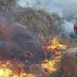 Criminales devastan bosques de la Tarahumara