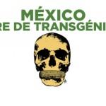 """""""Europeos rechazaron transgénicos, pero ellos tienen lana y nosotros no"""": funcionario a mayas"""