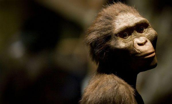 Lucy, el antecedente del ser humano, habría muerto al caer de un árbol