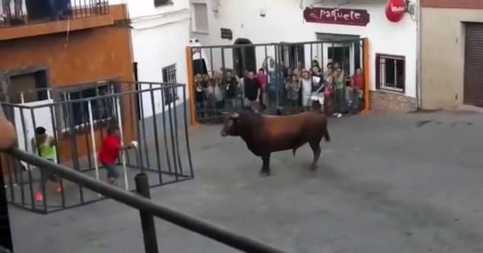 Azuza a toro desde la seguridad de una jaula… pero éste logra entrar (Video)