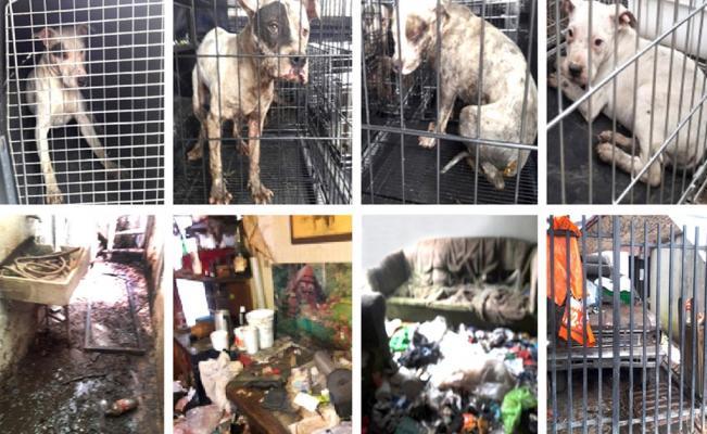 Rescatan a perros víctimas de zoofilia en Iztacalco