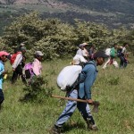 Restituyen a wixaritaris tierras ancestrales; tensión con ganaderos