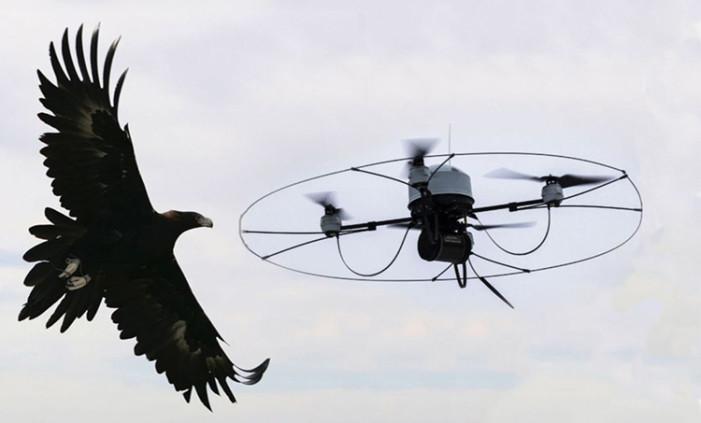 Aguilas contra maquinas, policía holandesa utiliza las aves para capturar drones