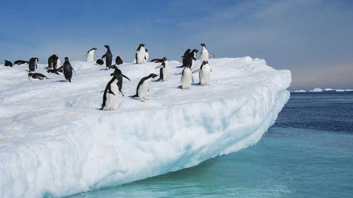 Hielo de la Antártida se hunde en agua caliente