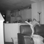 Escuchaban ruidos en la noche, pusieron una cámara y esto descubrieron