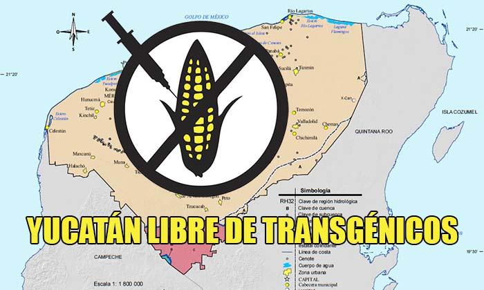 Yucatán se declara estado libre de cultivos transgénicos