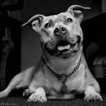 Mujer embarazada víctima de violencia intrafamiliar, fue salvada por su perro