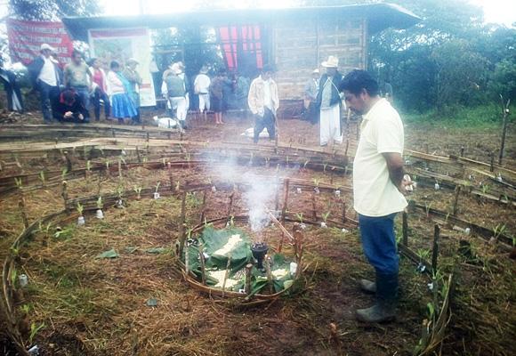 Siembran milpa de resistencia contra megaproyecto en Cuetzalan