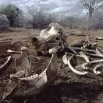 China prohibirá el comercio de marfil en 2017