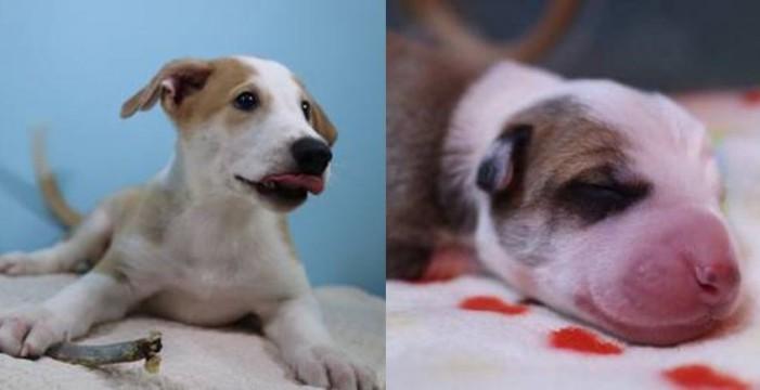 Pagan 100 mil dólares para clonar a su perro muerto