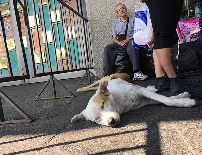 Peregrinos abandonan a sus perros en la Basílica