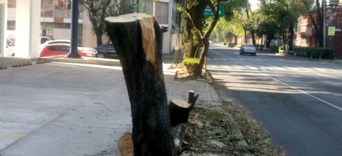 """A Farmacias del Ahorro le """"estorban"""" árboles para nueva sucursal y los tala"""