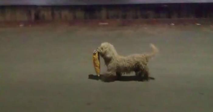 Perro saqueadorcito recibe croquetas y cambio de imagen gratis