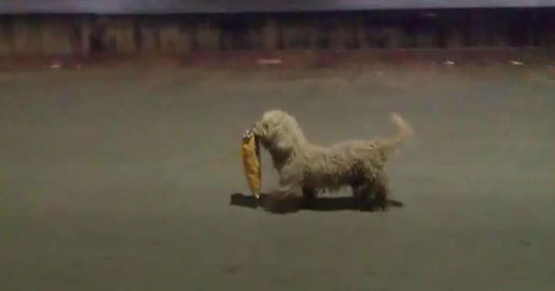 max perro saqueador