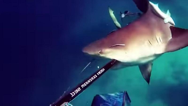 tiburon_toro
