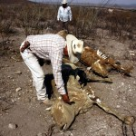 México enfrenta grave sequía en gran parte de su territorio por cambio climático