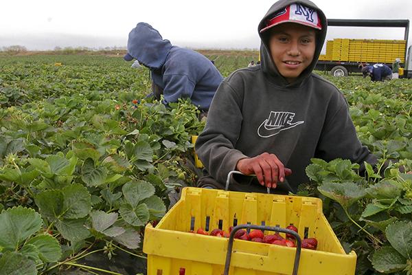 Si Trump deporta trabajadores, granjeros perderán miles de millones en cultivos