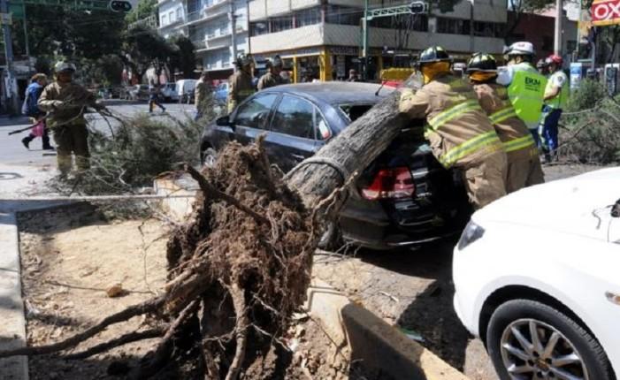 Fuertes vientos derrumban árboles y publicidad en la CDMX