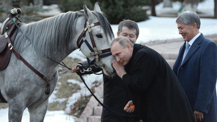 Regalan a Putin un caballo pura sangre por su afecto a los animales