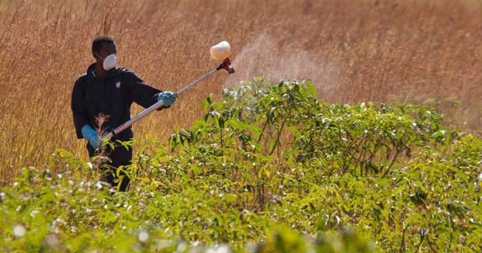 Plaguicidas son dañinos e innecesarios: ONU