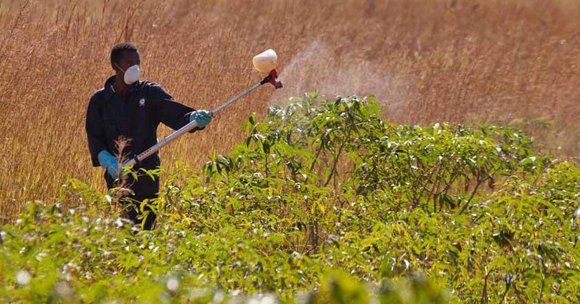 agrotoxicos pesticidas plaguicidas monsanto contaminación medio ambiente cultivos 2